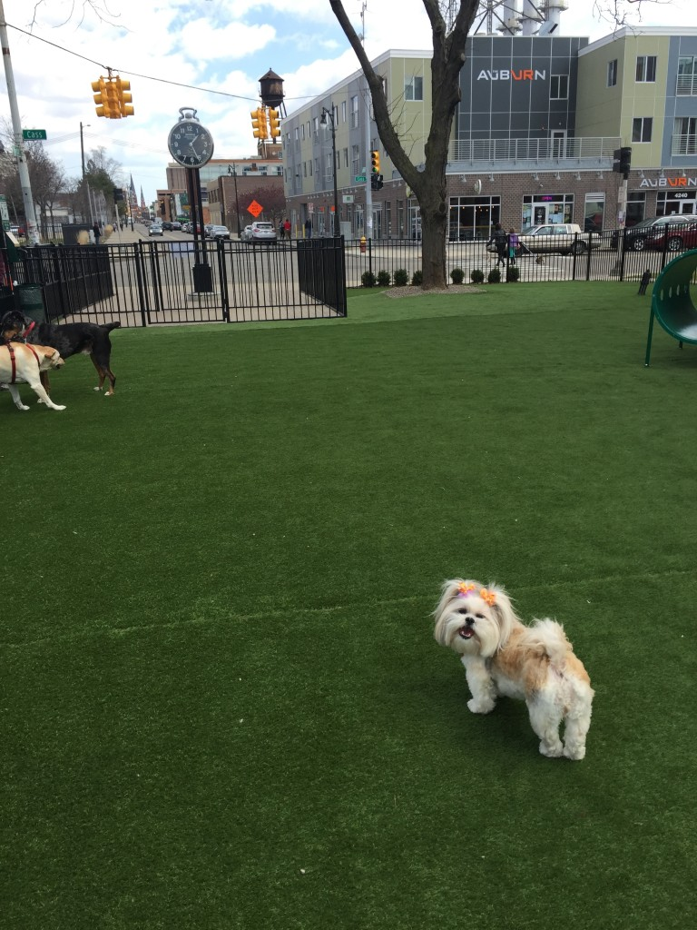 Shinola dog park in Detroit